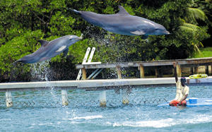 -una-de-las-mejores-ventanas-turisticas-de-Honduras-son-las-Islas-de ...
