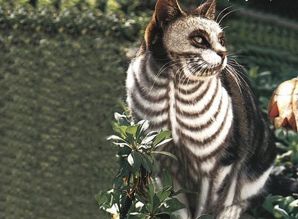 Cat Skeleton Halloween Costume