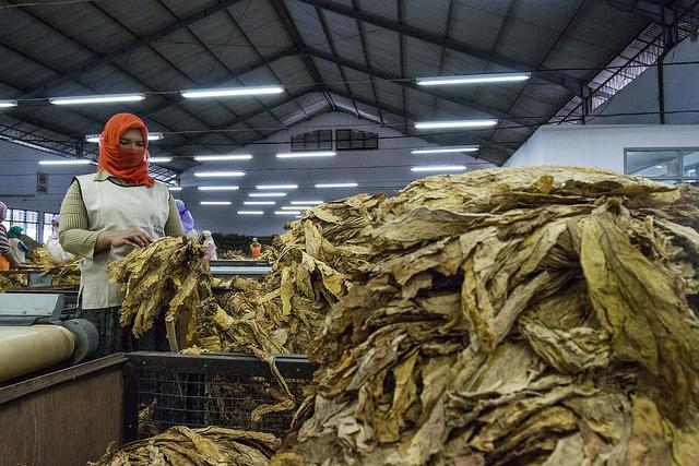 Djarum-Tobacco Station Lombok Montong Gamang