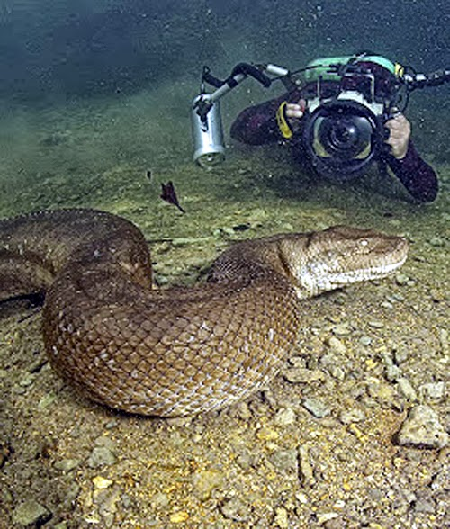Giant underwater snake - photo#5