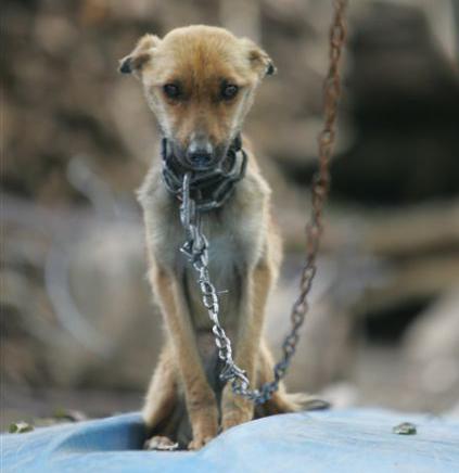 Short Essay on Animal Cruelty - World's Largest