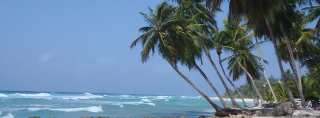 Facebook Cover Photo - Barbados Palm Tree