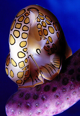 A colorful sea animal