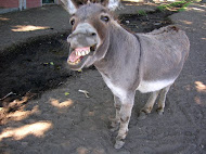 <b>Donkey Poem</b>