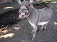 <b>Donkey Poem</b>