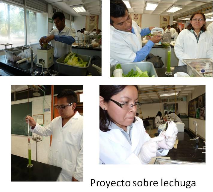 Ansioliticos naturales proyectos de investigaci n for Proyecto de investigacion de plantas ornamentales