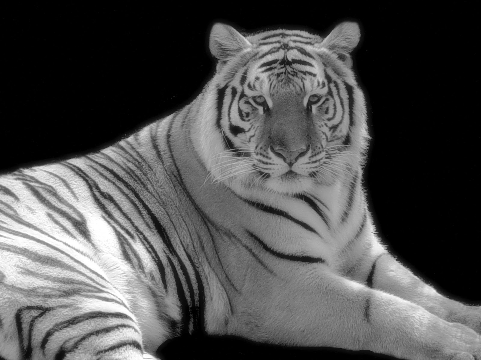 Feng shui 8 mansions feng shui celestial creatures white tiger feng shui celestial creatures white tiger biocorpaavc