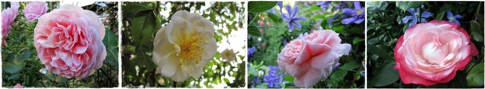 Växterna i min trädgård