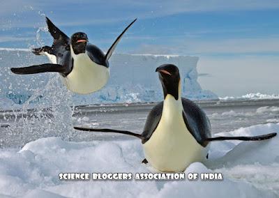 पेंगुइन (Penguin)