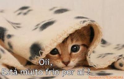 Imagens de Gatos para postar no Facebook