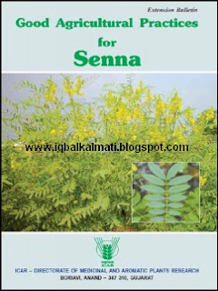Senna Plant Uses Benefits and Cultivation