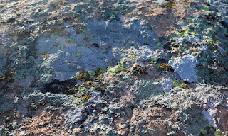 Detail of the lichen on the rock