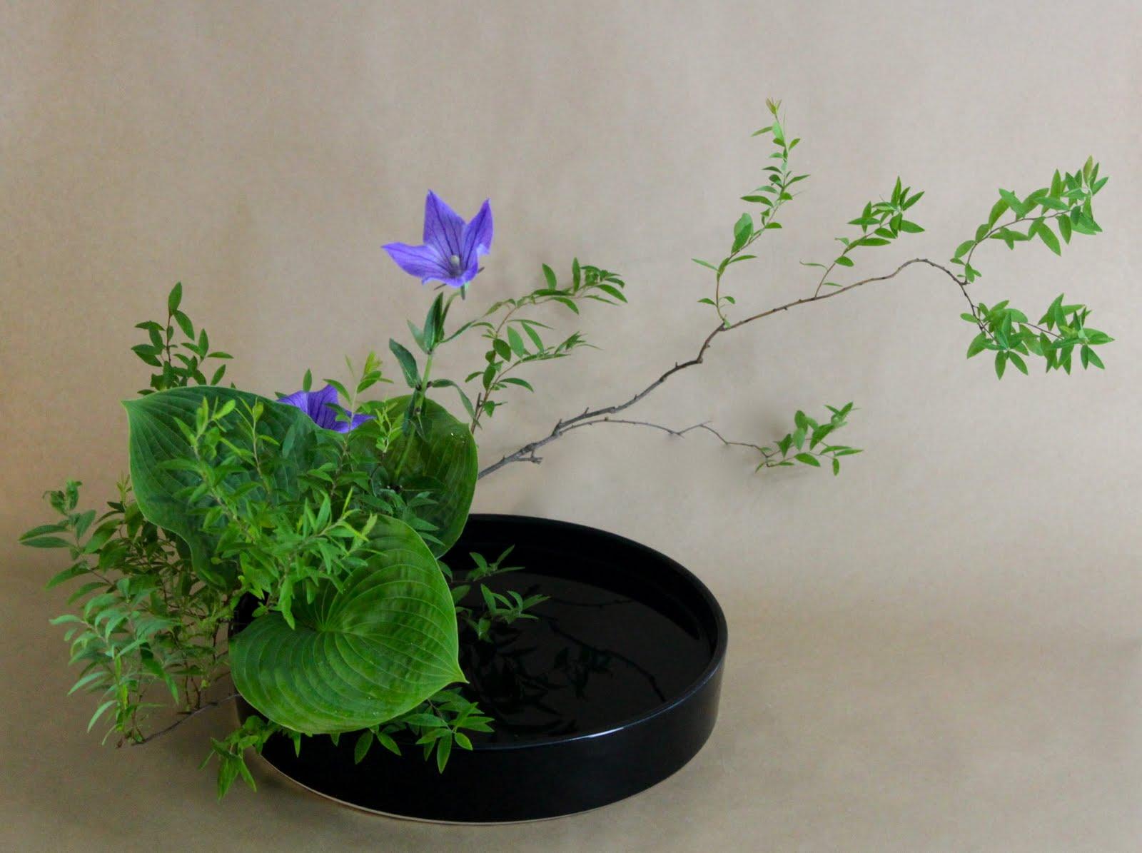 hanamai the ikebana blog Water Flowers