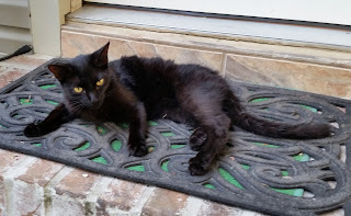 Too-Tha resting on doormat of back door.