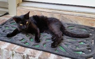 Too-Tha resting on doormat of back door.