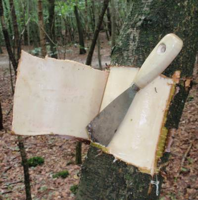 Natuurwerk is mensenwerk het ringen van bomen - Hoe een boom te verlichten ...