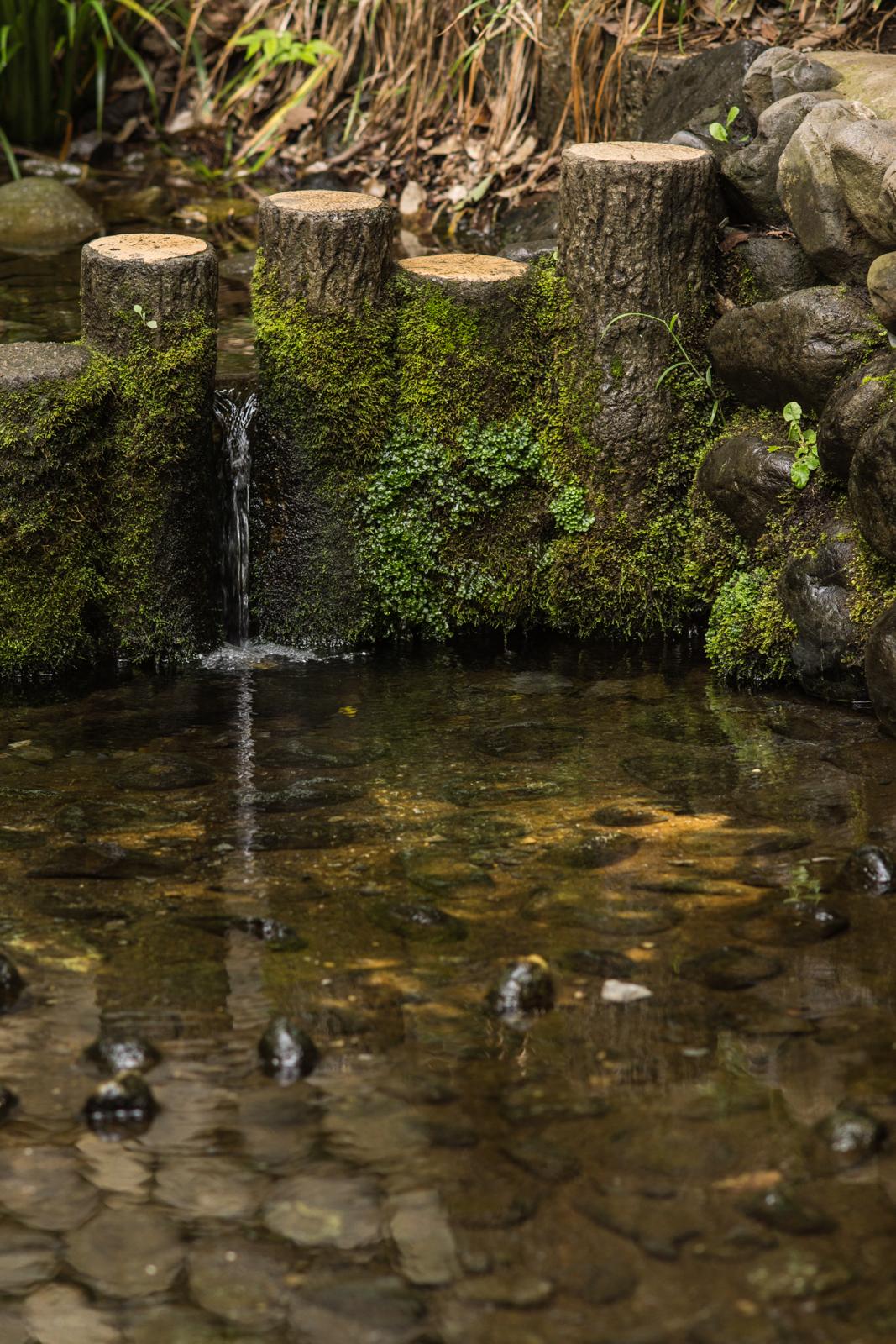お鷹の道、湧水付近の写真