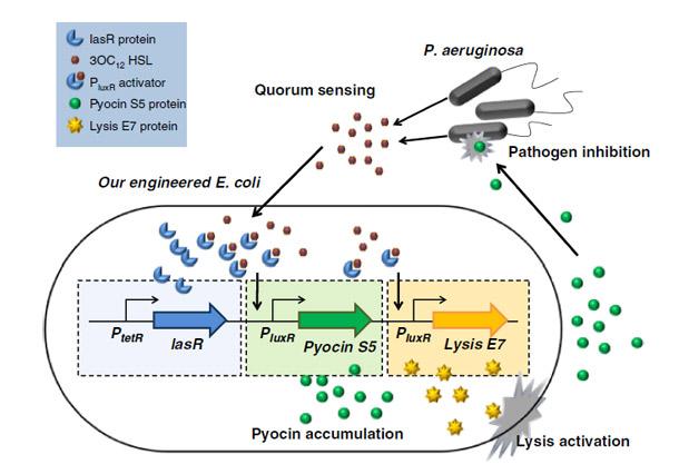 effects of ethanol on the escherichia coli plasma membrane pdf