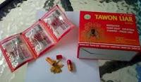 obat tawon liar murah
