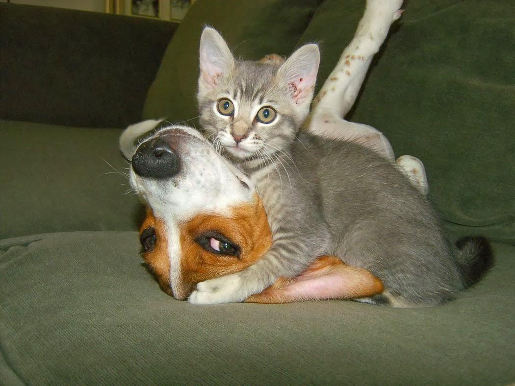 விலங்குகளின் -வினோத படங்கள்.. - Page 2 Funny+Animal+Love_