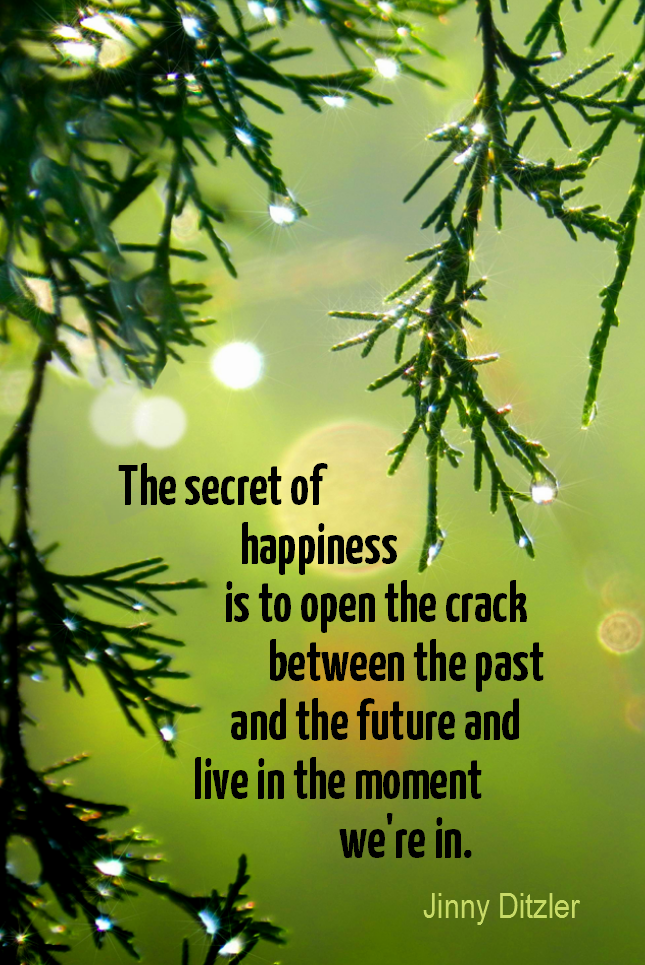 visual quote - image quotation for MINDFULNESS - The secret of happiness is to open the crack between the past and the future and live life in the moment we're in. - Jinny Ditzler