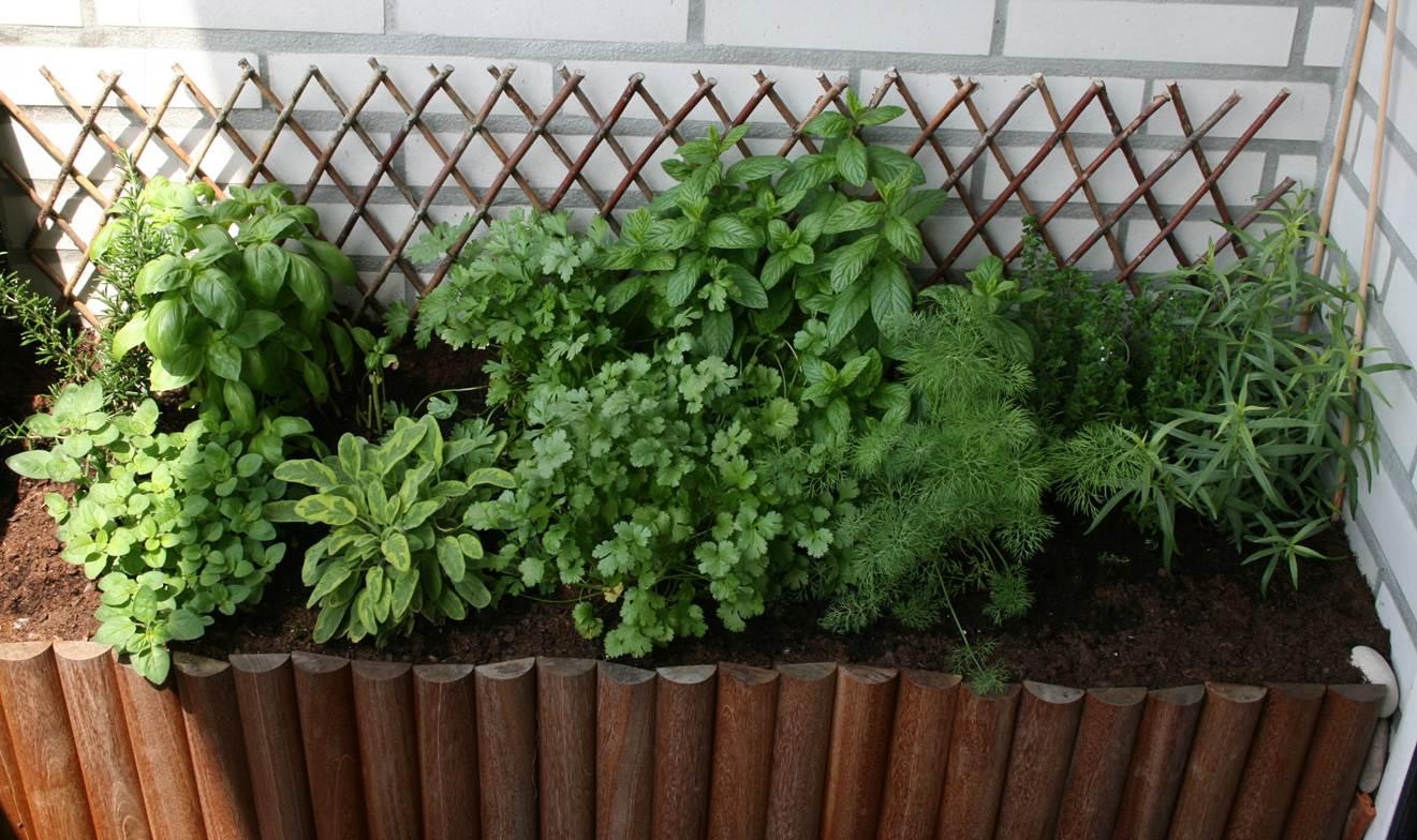 Bolinho de Coco: Jardim Ervas Arom?ticas