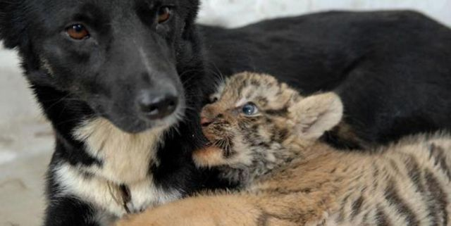 Dog Hates Cat But Plays With The Other