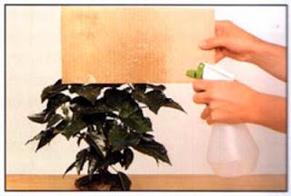 Опрыскивание цветущих растений