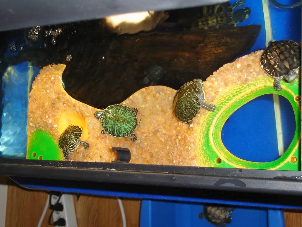 for Peceras para tortugas