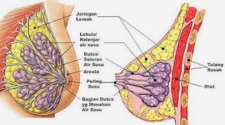 http://solusimasalahkeluarga.blogspot.com/2013/11/pengencang-pencegah-kangker-payudara.html