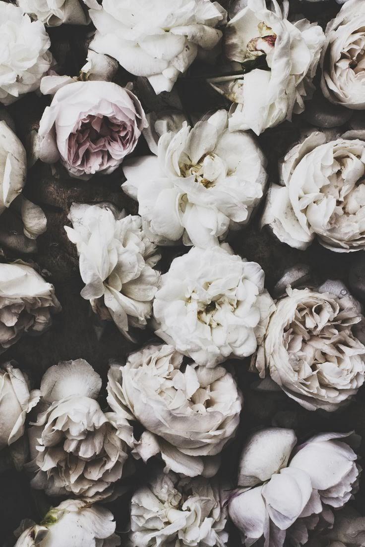 pretty grey roses