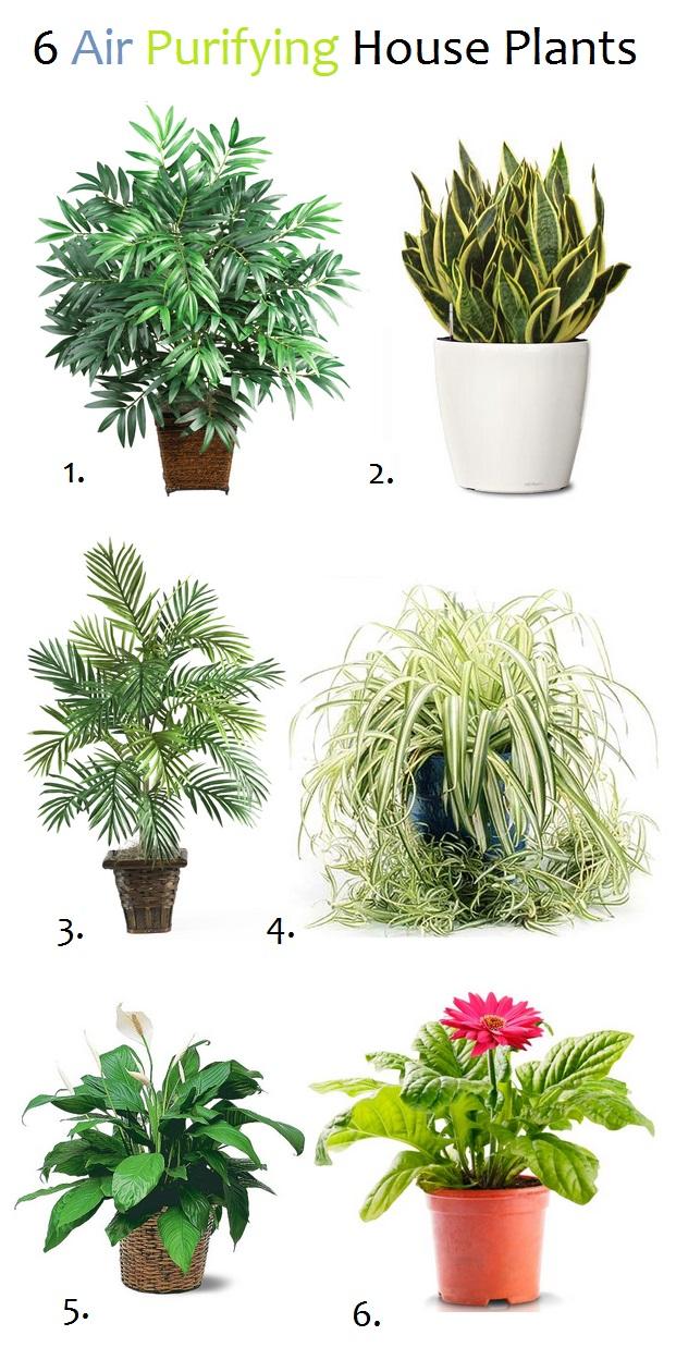 air purifying plants. Black Bedroom Furniture Sets. Home Design Ideas
