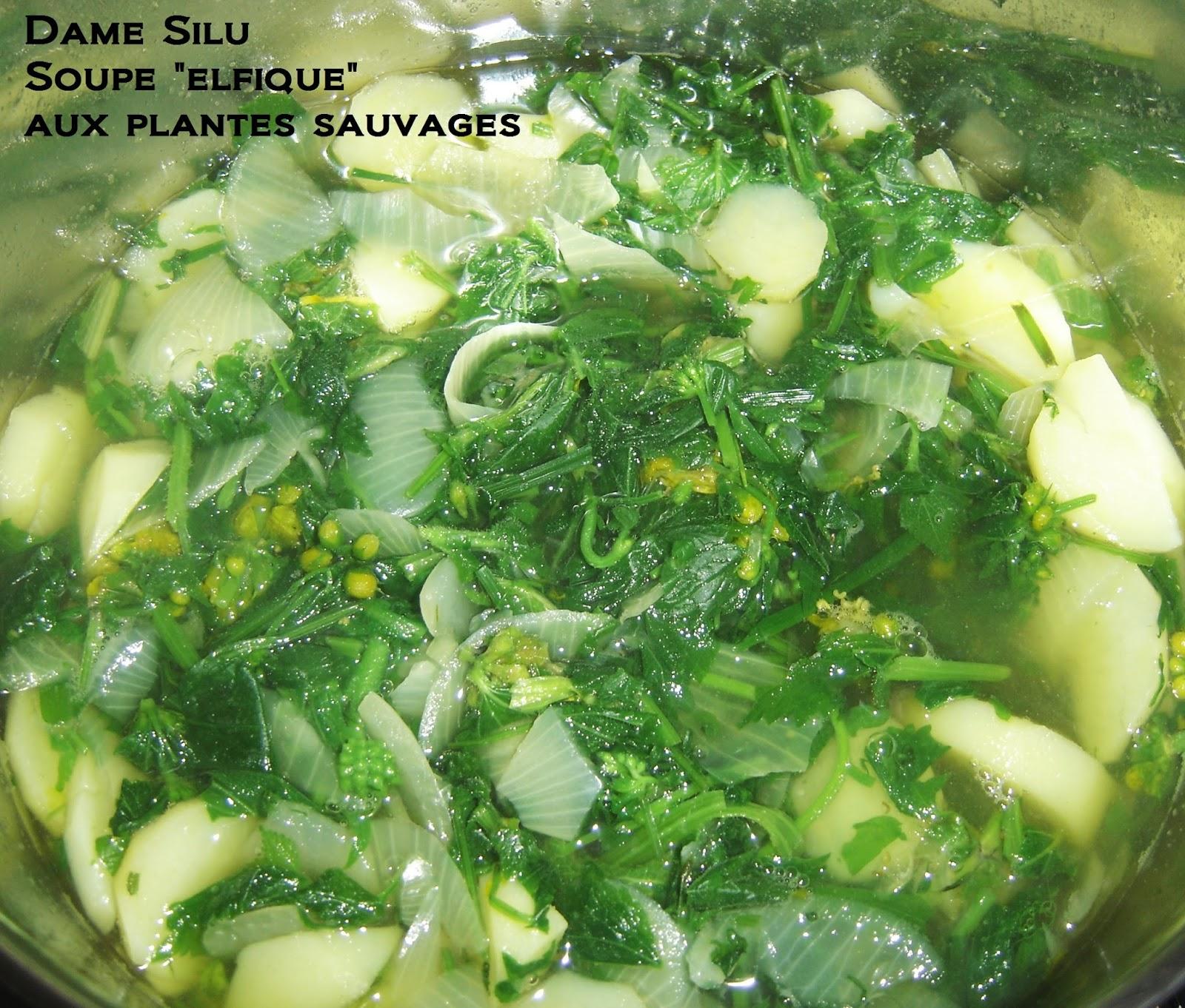 Dame silu l 39 elfe noire cuisine sauvage la soupe elfique - Cuisine plantes sauvages ...