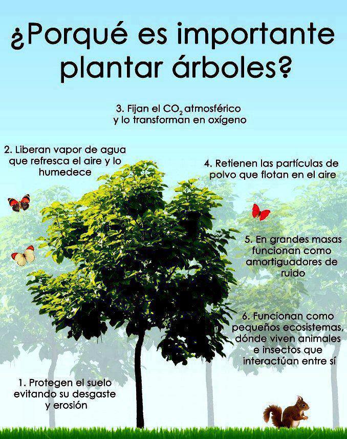 Sobre El Cuidado Del Medio Ambiente 2013 | MEJOR CONJUNTO DE FRASES