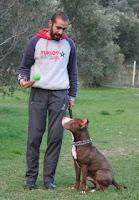 Kendi köpeğini kendisi eğitmek isteyen köpek sahiplerine özel...