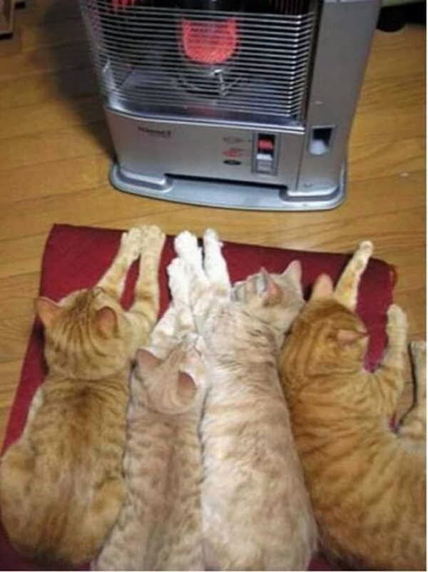 Funny cats - part 83 (40 pics + 10 gifs), cat pics, cats sleep in front of heater