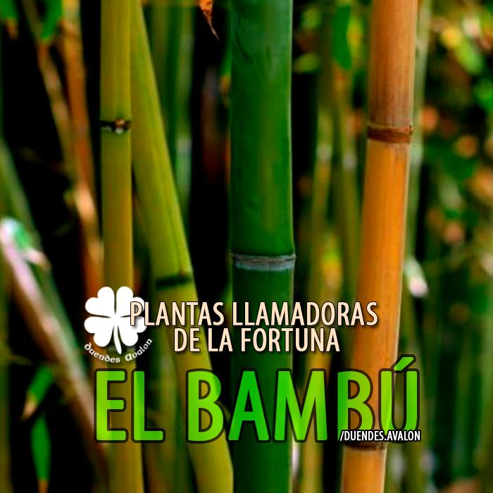 Baños Plantas Para Buena Suerte:PLANTAS LLAMADORAS DE LA FORTUNA ★