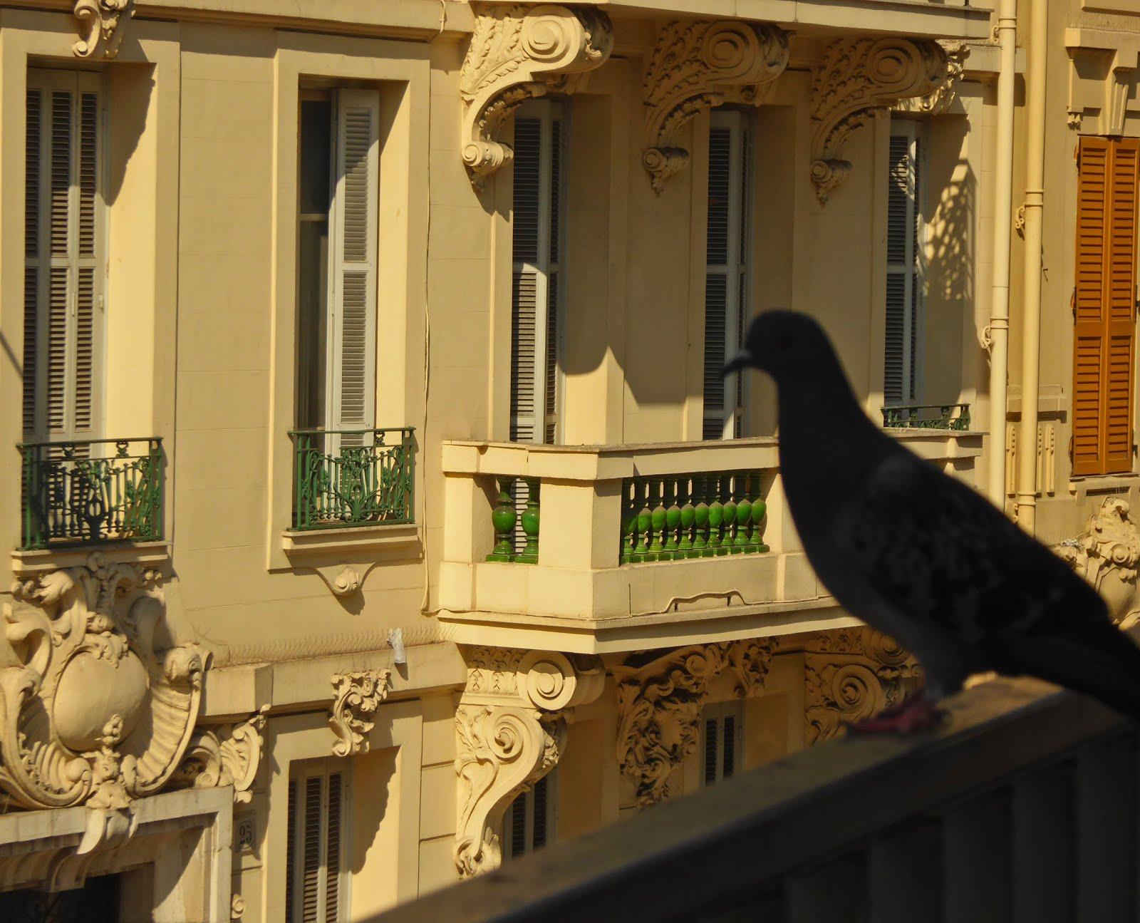 Duva i Nice