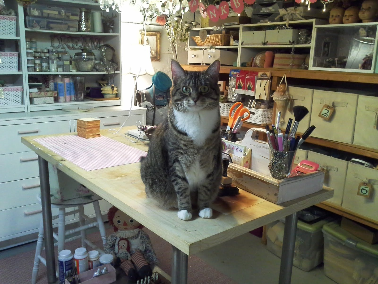 Jersey, my craft room helper