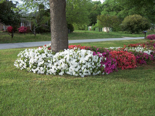 home and garden flowers