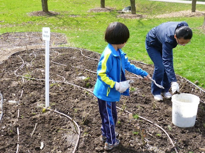 Rose Garden gets spring cleanup with help of a young boy volunteer from Tzu Chi, Port Credit.