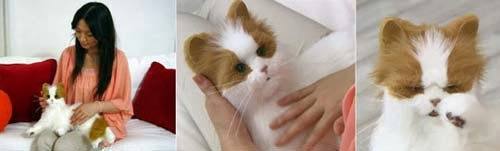 Boneka Anak kucing yang seolah hidup