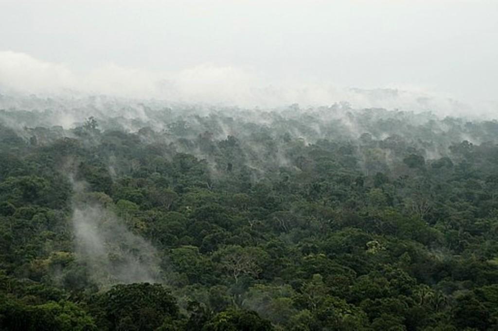 Floresta em evaporação