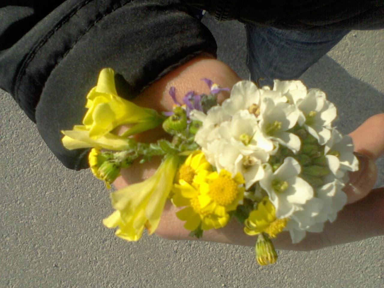 Dogwood Flower Bouquet Image collections - Flower Wallpaper HD