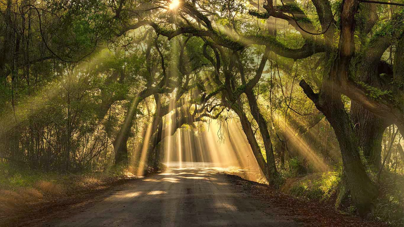 Botany Bay road, Edisto Island, South Carolina (© Michael ...