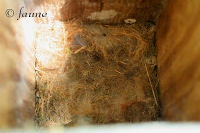 Empty Chickadee Box