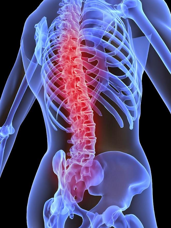 Sistema Músculo - Esquelético: La columna vertebral, una parte vital ...