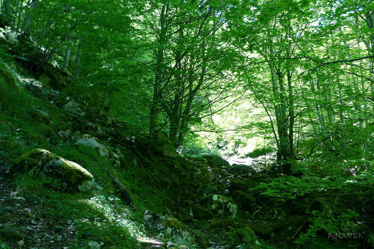 Bosque de Lindes - Parque Natural de Las Ubiñas - La Mesa - Quirós- Asturias