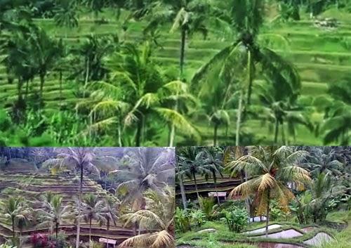 Tegalalang Ubud Bali