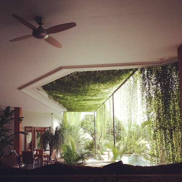 Moon to moon happy hanging house plants for Indoor plants design ideas